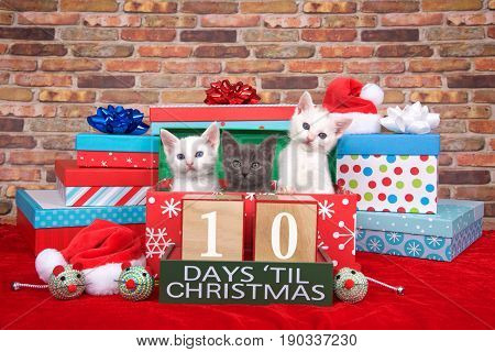 Two fluffy white and one gray kitten popping out of a pile of presents small santa hats toy mice and count down to Christmas blocks. Red fuzzy carpet brick wall background. 10 days til Christmas