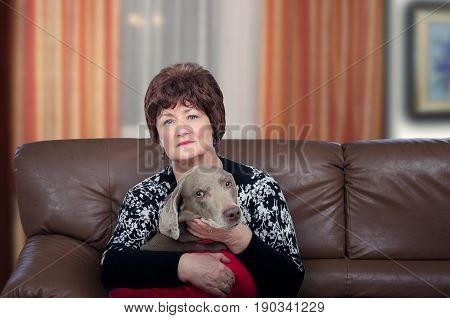 Aged woman sitting on leather sofa with weimaraner dog in arms and looks at the camera. Horizontal shot on blurred indoors background