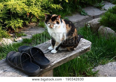 The missing cat sits in a garden on a bench and guards pair of street slippers. poster