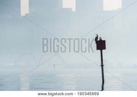 A cormorant sites on a sign in the Swan River, Perth, Western Australia, on a hazy (smoke haze) morning.