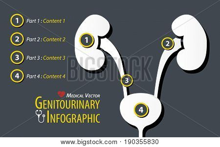 Genitourinary Infographic . Flat design . vector