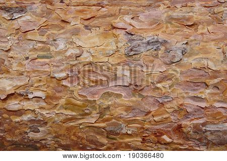 Pine wood bark section detail. Timber industry. Nature background. Horizontal