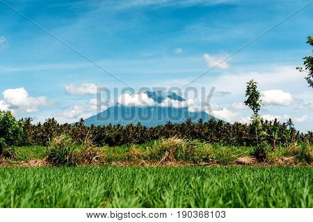 Mount Agung or Gunung Agung. A view of a sacred and famous Balinese volcano with a green rice field in the foreground. Bali Indonesia