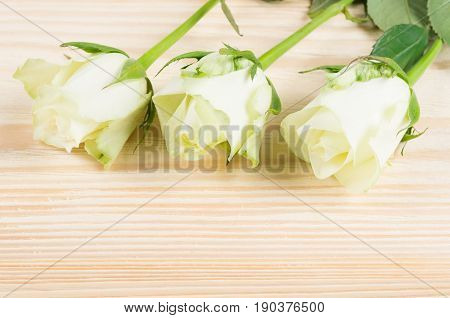 Three white roses on a light wooden board