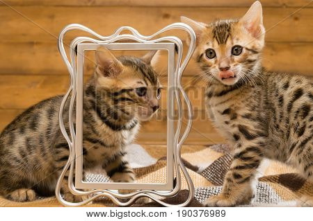 Two kittens amicably playing against the photo frame