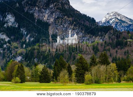 Neuschwanstein castle with yellow flower field in foreground and mountain in the background Fussen Germany.