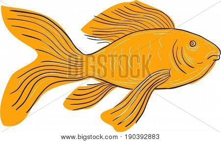 Drawing sketch style illustration of a Gold Butterfly Koi also called Long Fin Koi swimming viewd from the side set on isolated white background.