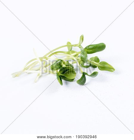 Heap of sunflower sprouts, micro greens on white background. Healthy eating concept of fresh garden produce organically grown as a symbol of health and vitamins from nature. Microgreens closeup