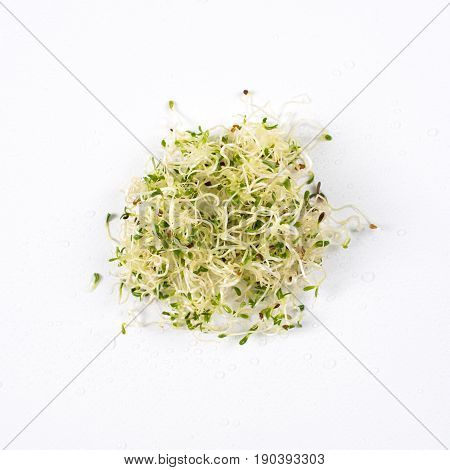 Heap of sprouted alfalfa seeds, micro greens on white background. Healthy eating concept of fresh garden produce organically grown as a symbol of health and vitamins from nature. Microgreens closeup