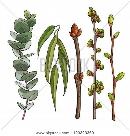 Set of tree twigs with leaf bud ready to burst, willow and eucalyptus branches, sketch vector illustration isolated on white background. Hand drawn spring season tree twigs eucalyptus willow branches