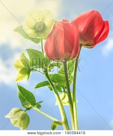 Beauty bright flowers on blue sky background