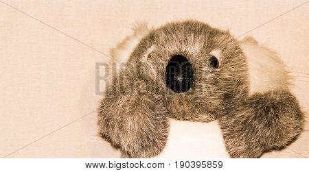 koala toy realistic look, on white background