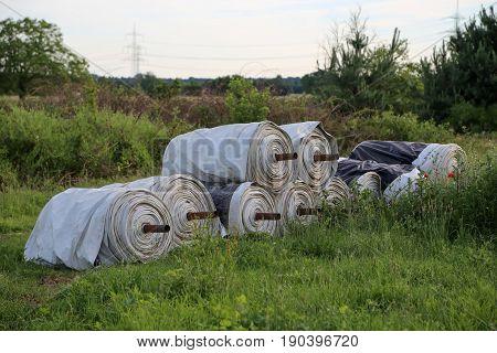 Cultivation process Asparagus plants / Asparagus cultivation / Foil rolls lie on the margins