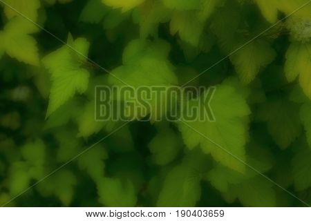 Nature green abstract blurred background. Cropped closeup image of green leaves.