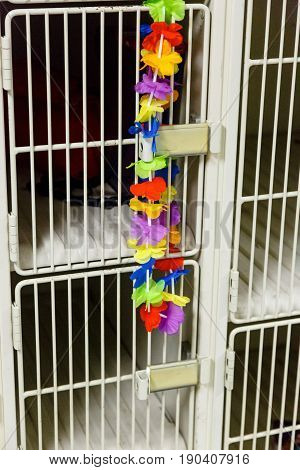 a hawaiian lei is an unusual locker decoration