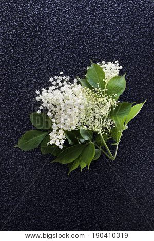 elderflower on dark background - alternative medicine