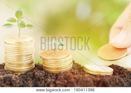 saving money preset by Male hand putting money coin and small tree growing up concept in business finance and account bank