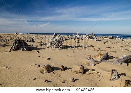 Driftwood Beach. Driftwood on a wide sandy beach with the blue waters of Lake Superior in the background. Whitefish Point in the Upper Peninsula of Michigan