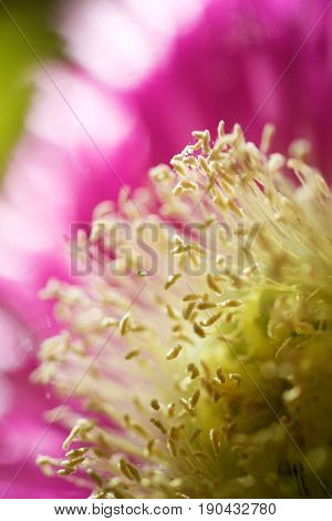 Close up of a lonely flower pink.