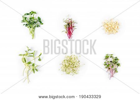 Different types of micro greens on white background. Healthy eating concept of fresh garden produce organically grown as a symbol of health and vitamins from nature. Microgreens closeup