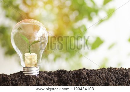 tree planting and growth up on money coins stacked on light bulb with soil concept in save World environment day reforesting eco bio arbor CSR ESG ecosystems reforestation concept