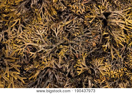 Seaweed over the sand as a texture
