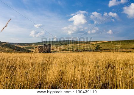 Field of cereals on a summer day