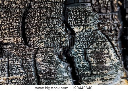 Burnt Wood Background Texture