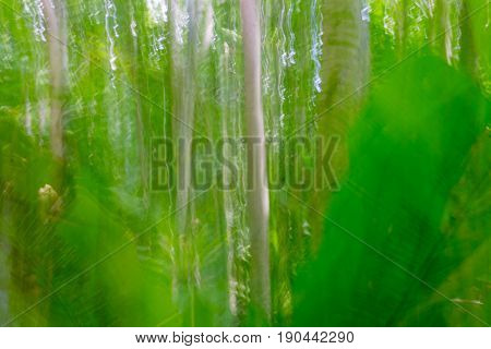 Abstract nature background blurs in lush green tones of stunning bush in popular travel destination on island of Niue in South Pacific
