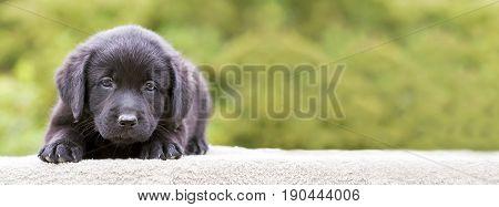 Website banner of a cute dog puppy