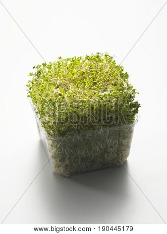 close up of alfalfa sprouts