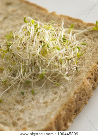 alfalfa sprouts on whole meal sandwich bread
