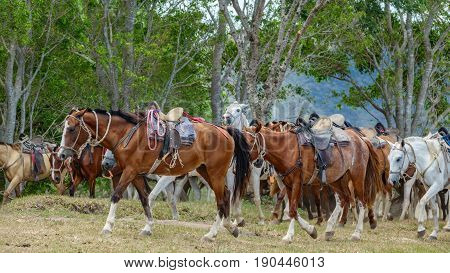 Side view of flock of horses walking with horse saddles
