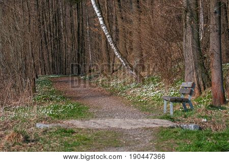 Photo Of A Dirt Road In The Middle Of A Spring Pine Forest