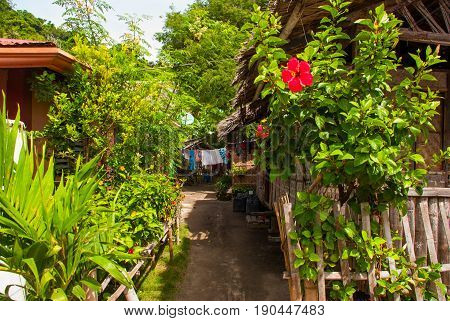 Red Flower. The Usual Local Rural House In Apo Island, Philippines