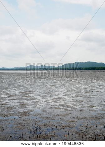 Wide angle view of the flat muddy plains of a mangrove forest during the low tides vertical orientation. Chanthaburi Thailand. Travel and nature concept.