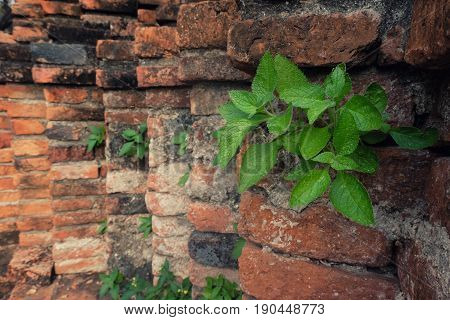 Small tree sprouting Come out of the brick nooks.
