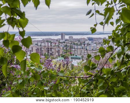 Birch and blooming lilacs in the foreground. In the background view of the city of Saratov and the Volga river, Russia.