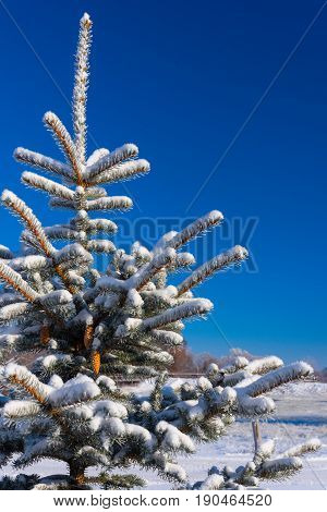 Winter landscape, tree in the snow against the blue sky