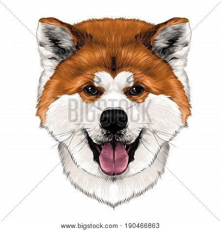 muzzle dog breed Akita inu with his tongue hanging out full face looking forward symmetrically sketch vector graphics color picture