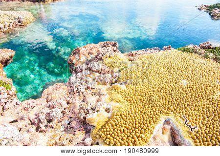Vibrant colors of coral and Hikutavake pools Niue.
