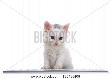 One cute adorable fluffy white kitten looking slightly to viewers right sitting in front of a computer keyboard isolated on white background.