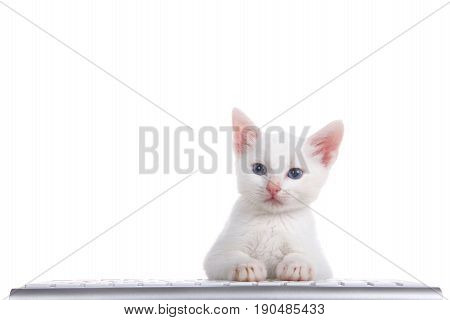 one fluffy white kitten with beautiful blue eyes laying on a computer keyboard isolated on white background looking directly at viewer.