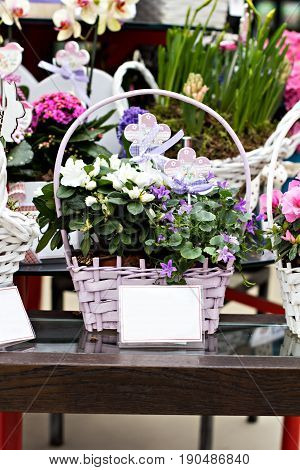 Pink Azalea Flowerpots For Sale In Flower Shop