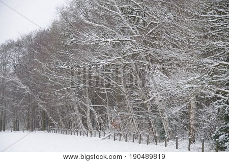 Snow covered trees in the part of the netherlands, near the city of Enschede