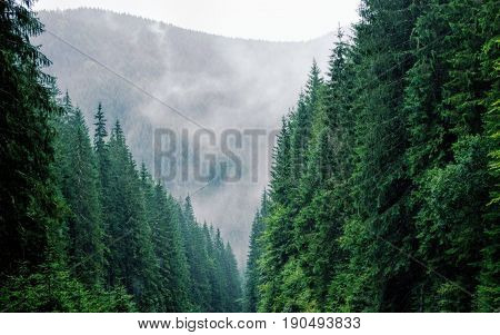 A breathtaking forest bringing out the best parts of nature