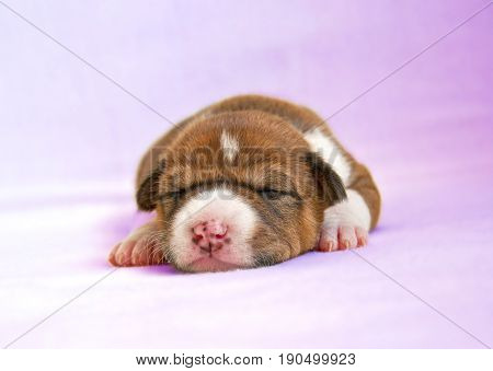 puppy sleeping on the pink bed. Anivals.