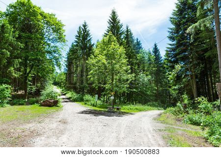 Path Fork Split In Dense Forest Trees Summer Foliage Dirt Footpath Daytime Bright Sunny Decision