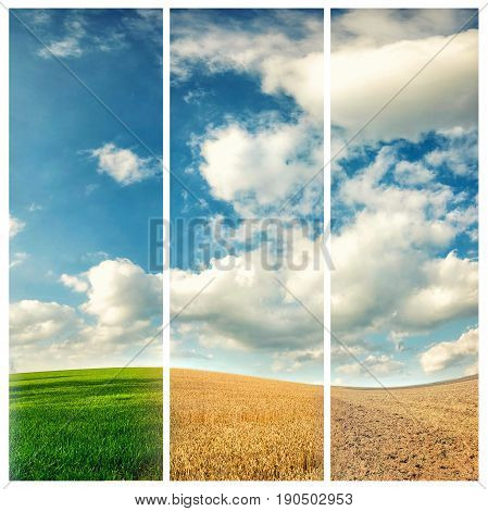 four seasons of year winter spring summer and autumn nature photo concept
