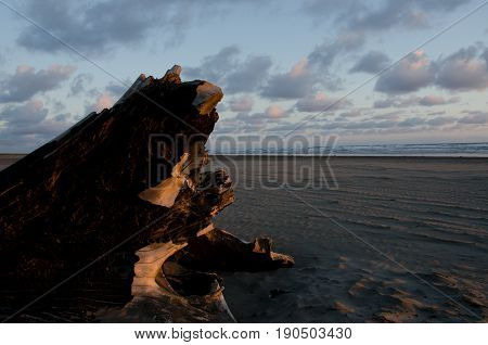 Driftwood Trunk Under Sunset Light In Ocean Shores